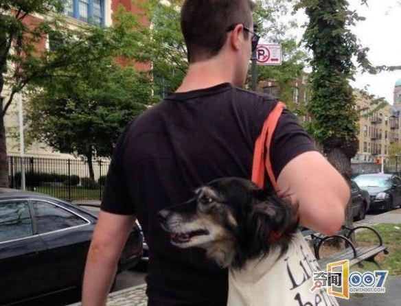 带狗出门有很多种方式可以放包里扛着